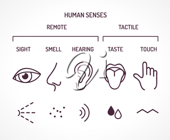Five basic human senses as sight smell hearing taste and touch. Set of outline symbols as eye nose ear tongue finger