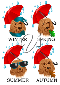 Weather in Britain. Dog under constant rain isolated on white