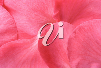 Royalty Free Photo of a Pink Petal Background