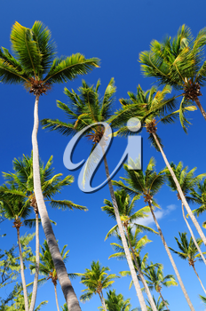 Lush green palm trees on blue sky background
