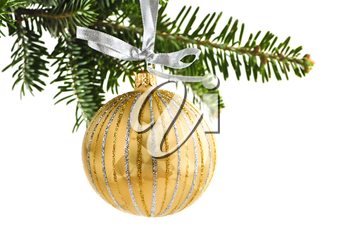 Golden Christmas decoration hanging on pine branch isolated on white