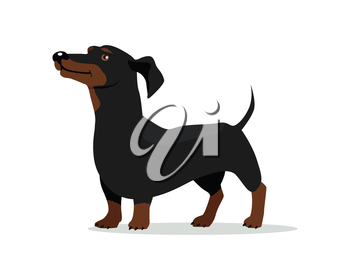 Dachshund or badger dog breed flat design vector. Purebred pet. Domestic friend and companion animal illustration. For pet shop ad, animalistic hobby concept, breeding illustration. Canine portrait