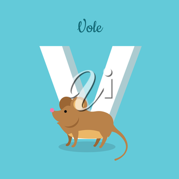 Animal alphabet vector concept. Flat style. Zoo ABC with wild animal. Cute vole mouse standing on blue background, letter V behind. Educational glossary. For children s books, textbooks illustrating
