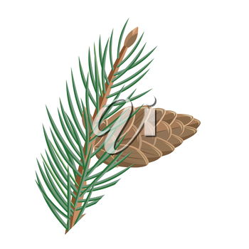 Pine branch with cone vector illustration. Flat design. Evergreen plant illustration for nature concept, gardening books illustrating, greeting cards decoration design.  Isolated on white background