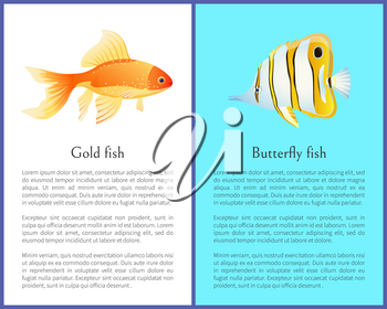 Butterfly and Gold fish cartoon flat vector illustration poster with text sample. Exotic sea intabitants butterfly and goldfish, rare aquatic species.