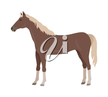 Sorrel horse with white legs vector. Flat design. Domestic animal. Country inhabitants concept. For farming, animal husbandry, horse sport illustrating. Agricultural species. Isolated on white