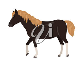 Black horse with red mane and white legs vector. Flat design. Domestic animal. Country inhabitants. For farming, animal husbandry, horse sport illustrating. Agricultural species. Isolated on white