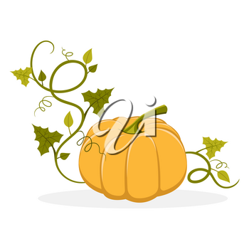 Big ripe pumpkin with swirly and leafy stem that twines round isolated vector illustration on white background. Organic fruit of gourd plant.