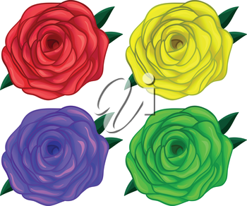 Illustration of the four colorful roses on a white background