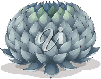Illustration of an Agave parryi on a white background
