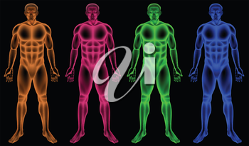 Illustration of the male coloured bodies