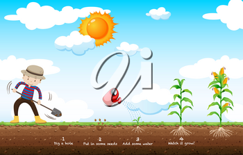 Gardener planting corn in the field illustration
