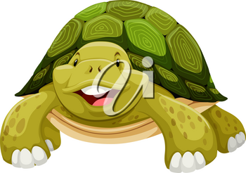 Green turtle smiling on white background