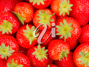 Collection of fresh dutch red strawberry, isolated
