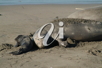 Stock Photography of Seals On a Beach