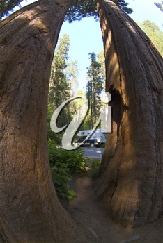Camper At Sequoia National Park - Stock Photography