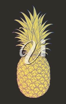 Hand drawn decorative pineapple. Stylized colorful fruit. Summer spring background, nature collection. Vector illustration