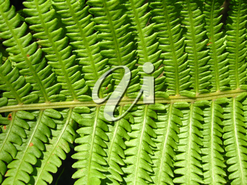 image of nice pattern from leaves of fern