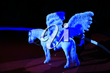 White horse with wings performing in circus. Beautiful pegasus. Animal trainer riding horse with white wings circling circus