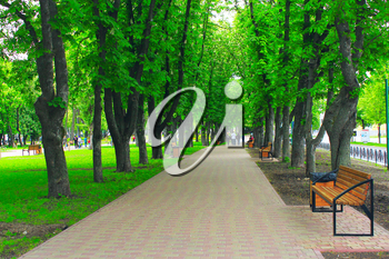beautiful park with promenade path high green trees and benches