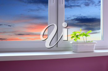 young plants of oaks on the window-sill of balkony and view to the evening sky. landscape with sunset seen from window