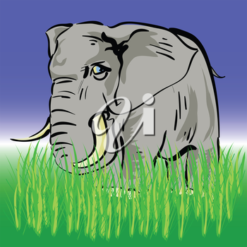 colorful illustration with  elephant  for your design