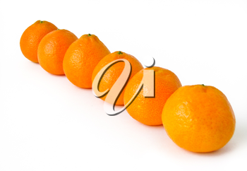 tangerine on white background located in one row