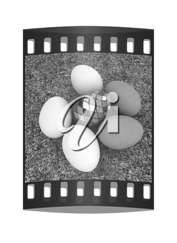 Eggs and easter eggs and grass. The film strip