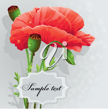 Royalty Free Clipart Image of Poppies on a Grey Background