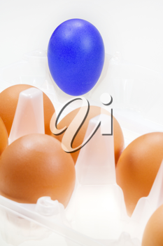 one separate blue hen's egg against several brown eggs