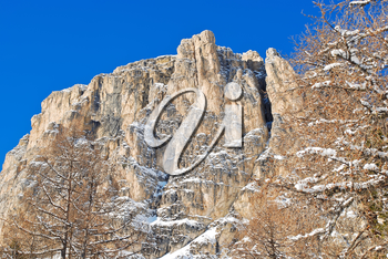 bare tree and rock in Dolomites mountain in Val Gardena, Italy