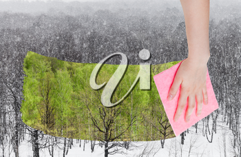 season concept - hand deletes snowing over winter woods by pink cloth from image and summer green trees are appearing