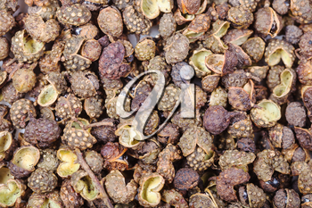food background - many dried pods of Sichuan pepper