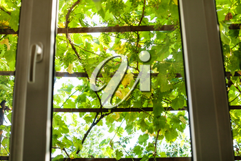view of green vineyard through home window in rural house