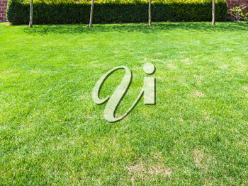 clipped lawn with green hedge on backyard of country house