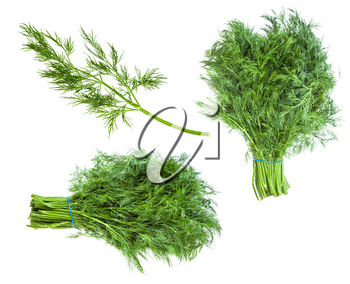 set from fresh green dill herb isolated on white background