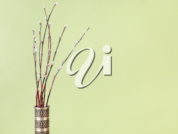 pussy willow sunday (palm sunday) feast concept - bunch of flowering pussy-willow twigs in vintage pewter jug on olive pastel background with copyspace