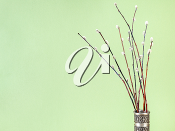 pussy willow sunday (palm sunday) feast concept - bunch of flowering pussy-willow twigs in vintage pewter jug on khaki pastel background with copyspace