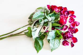 bouquet of wilted red rose flowers and fallen petals on pale brown table