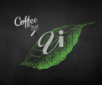 Vector chalk drawn sketch of coffee leaf on chalkboard background.