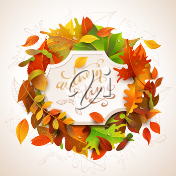Birch, elm, oak, rowan, maple, chestnut, aspen leaves and acorns. Bright colourful autumn leaves and white paper badge on them. You can place your text in the center.