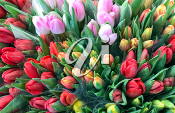 Colorful tulips for sale at market.