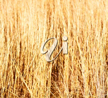 blur in  south africa  abstract grass like background texture