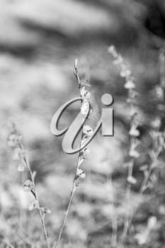 in the grass and abstract background white flower