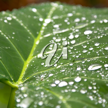 some drops in a leaf after   the rain like background wallpaper