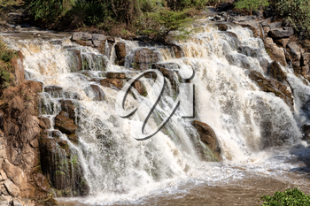 in  ethiopia africa the  awash national park  and the falls nature wild