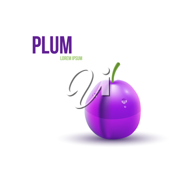Realistic Plum isolated on white background. Vector illustration