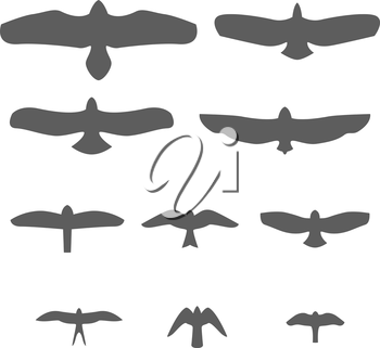 Set of Silhouettes of birds of prey Vector Illustration