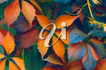 Natural background: leaves of bright colors