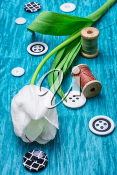 one white tulip and buttons with threads on turquoise wooden background